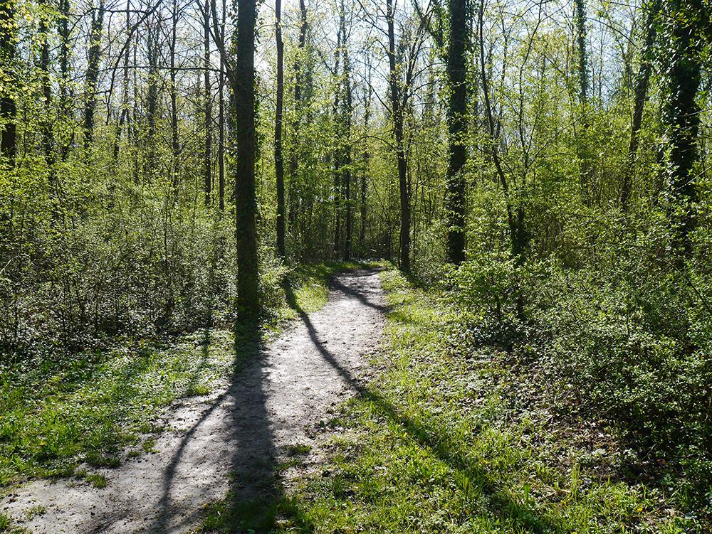 Rheinwald