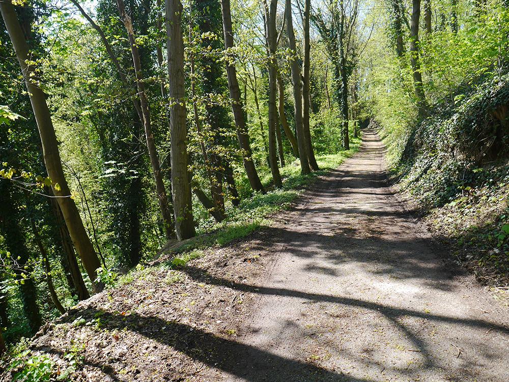 Wald bei Leiselheim