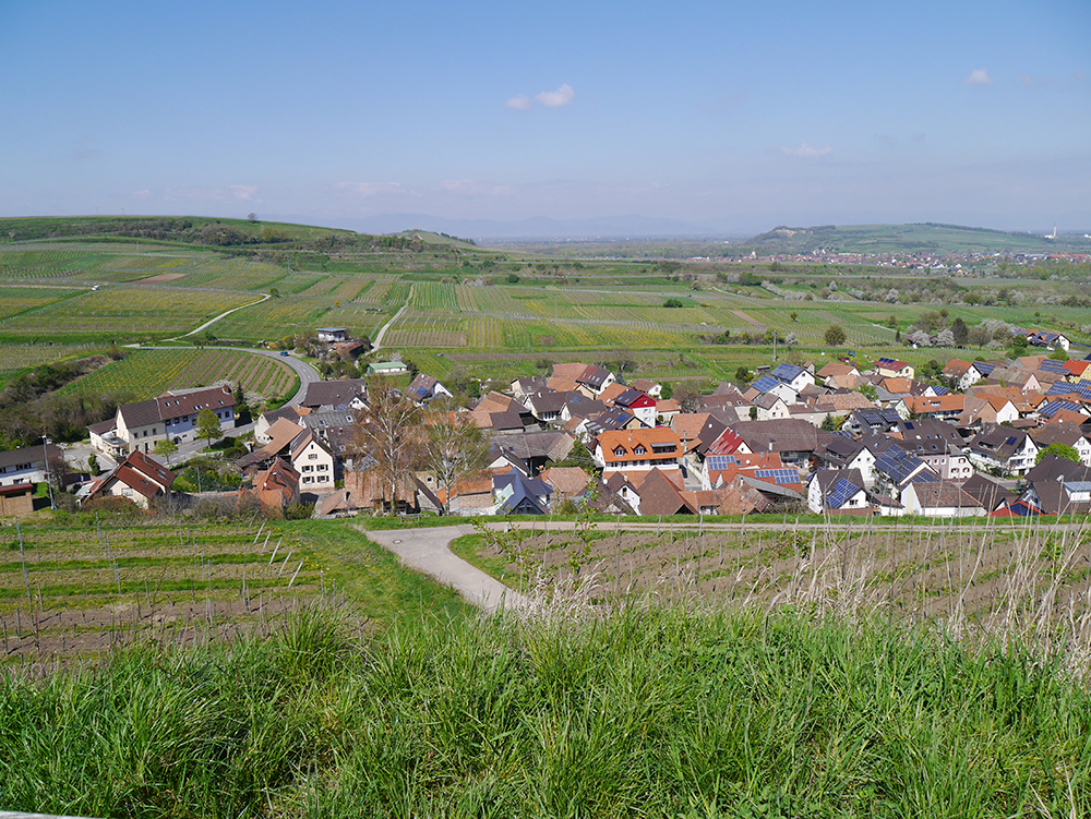 Blick auf Leiselheim